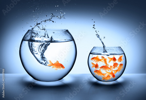 goldfish jumping - improvement concept Fototapeta