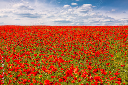 La pose en embrasure Rouge Field of red poppies
