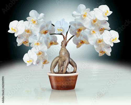Orchideen auf Ginsengwurzel, Montage