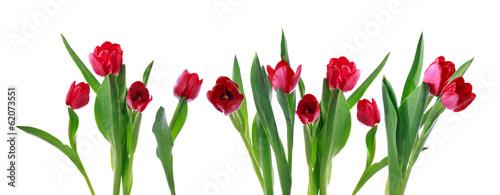 Photo  Red horizontal tulip banner