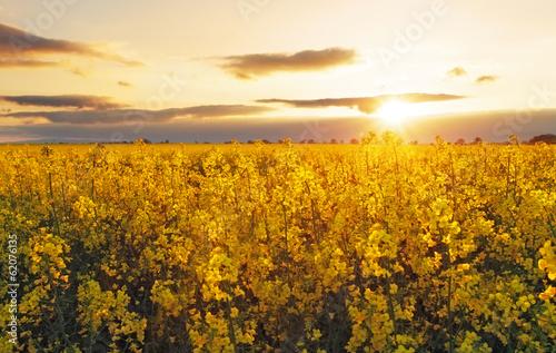 Foto auf Gartenposter Landschappen Flower Yellow field