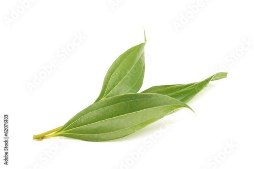 Láminas  シナモンの葉