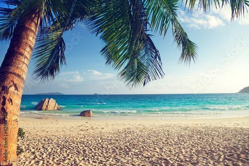 "Community Maske ""army blue"" - Anse Lazio beach, Praslin island, Seychelles (von Iakov Kalinin)"
