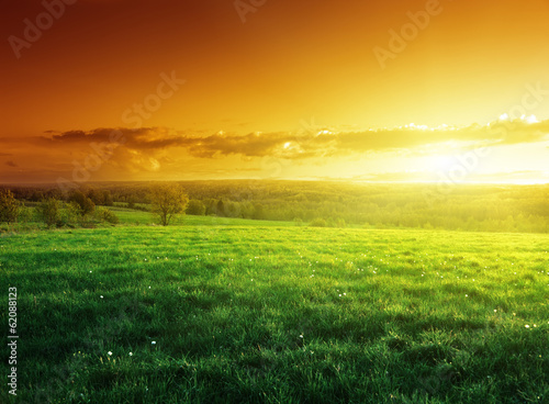 Tuinposter Honing field of spring grass in sunset time