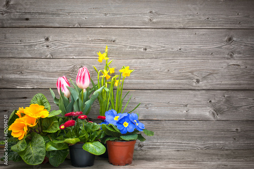 In de dag Narcis spring flowers in pots on wooden background