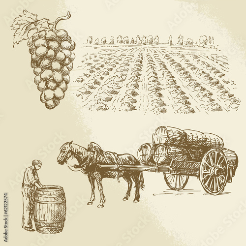 vineyard, harvest, farm - hand drawn collection Fototapete