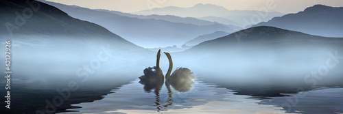 Beautiful romantic image of swans on misty lake with mountains i