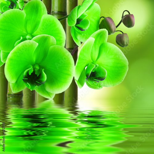 Fototapety, obrazy: orchid flower with bamboo and reflection in water