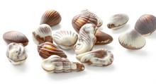 Chocolate Seashell Truffles