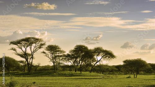 African savannah at sunset