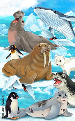 Deurstickers Poolcirkel Cartoon animal