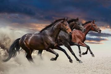 Obraz na Szkle Koń Horses running at a gallop along the sandy field