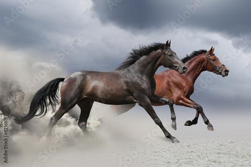 dwa-konie-biegna-w-galopie-wzdluz-piaszczystego-pola