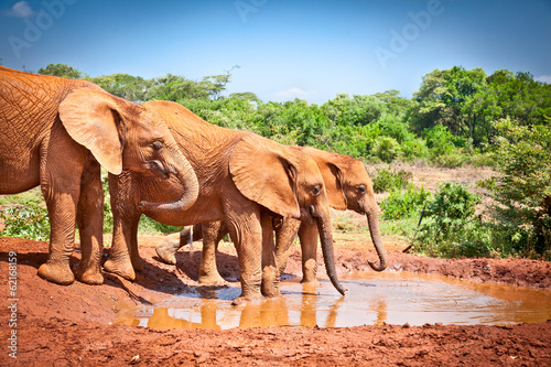 Poster Afrique du Sud Elephants at the small watering hole in Kenya.