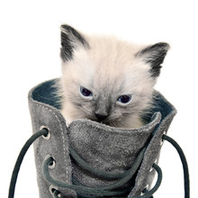 Cat In Boot