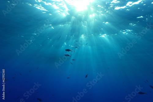 Fotobehang Koraalriffen Water surface and sunlight in the ocean