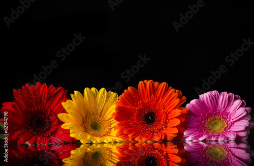 Colored gerber flowers