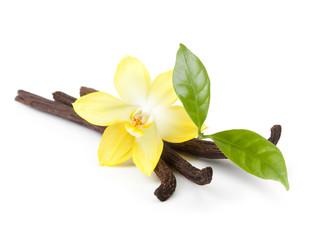 Fototapeta Wanilii strąków i kwiat orchidei na białym tle