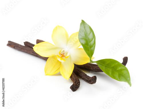 wanilia-straki-i-storczykowy-kwiat-odizolowywajacy-na-bialym-tle