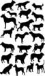 twenty two black isolated on white dogs