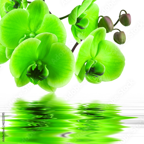 Fototapety, obrazy: orchid flower in closeup with reflection in water