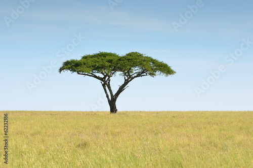 Photo acacia dans la savane