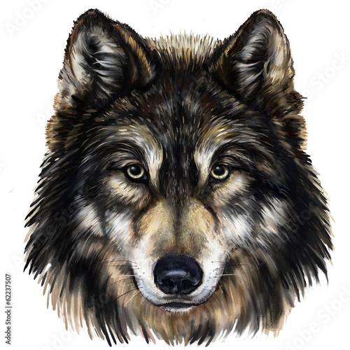rysunek-glowy-wilka