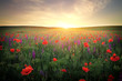 Field with grass and flowers against the sunset