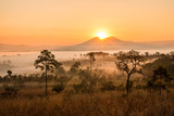 Fototapeta Sawanna -  savanna with sunrise and fog