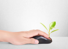 Hands Using  Mouse With  Plant