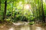 Piękny las i wiosna