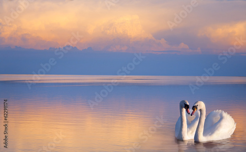 Fototapeta art  beautiful Two white swans on a lake