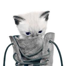 Cat In Boot