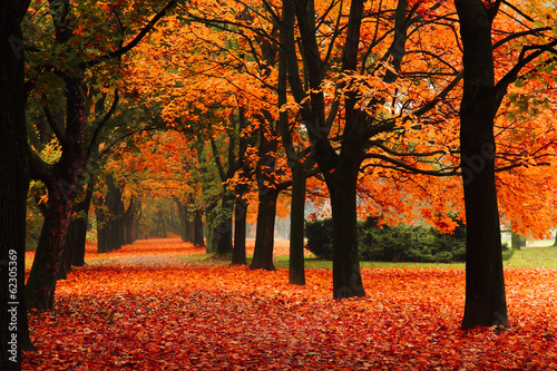 Photo sur Toile Orange eclat red autumn in the park