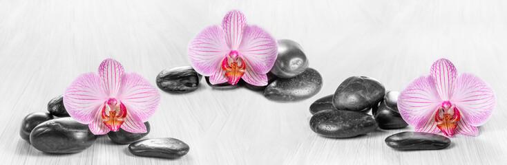 Fototapeta panoramę pozioma z różowych storczyków i zen kamienie na drewnianym