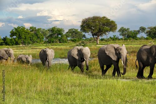 Elefantenkolonne in Afrika Canvas Print