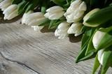 Fototapeta Tulipany - Wiosenne kwiaty