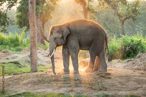 Elephant farm near Chitwan nation park in Nepal Canvas Print