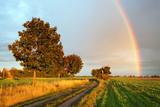 Fototapeta Tęcza - Rainbow over field