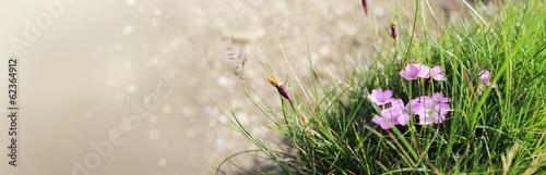 makro-ujecie-zielonej-trawy-z-rozowymi-kwiatkami