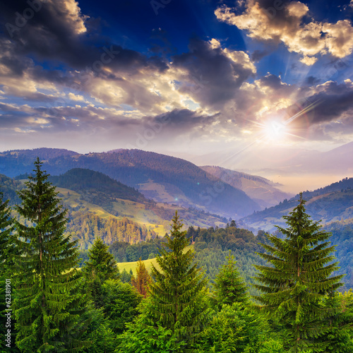 Foto op Canvas Bleke violet pine trees near valley in mountains and forest on hillside under