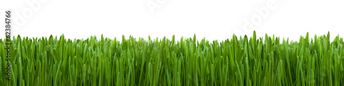 Ostergras vor weißem Hintergrund #62384766