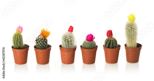 Foto op Canvas Cactus Collection of cactuses in a pot on white background