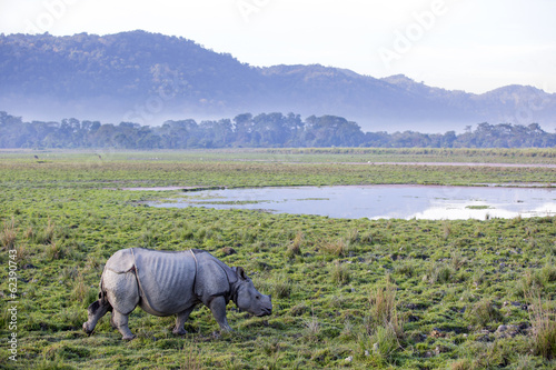One horned rhinoceros in Kaziranga National Park Canvas Print