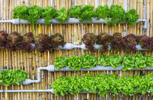 Fotografie, Obraz  Hydroponic Vertical Gardening