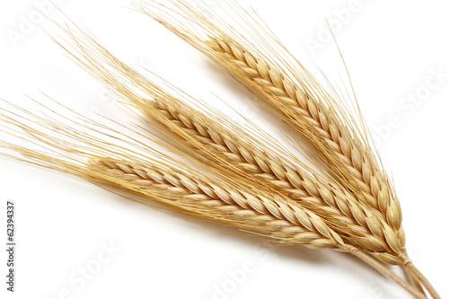 Carta da parati Wheat bundle