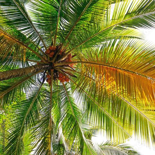 tlo-kokosowe-drzewo