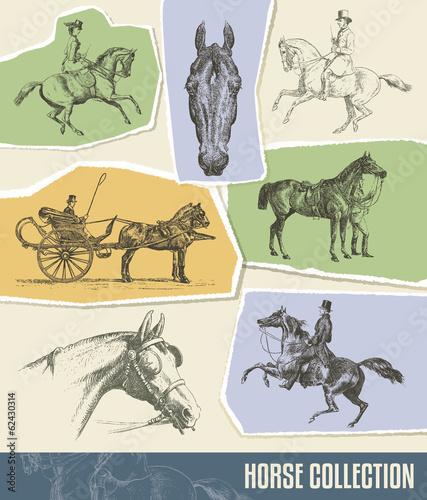 Photo  Vintage Horse Vector Set