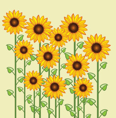 Fototapetavector sunflower greeting card background