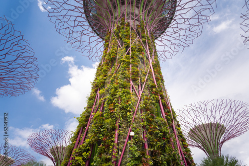 Photo  Supertrees Grove in Gardens by the Bay botanical in Singapore